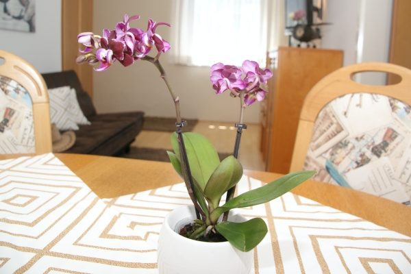 Bud Spencer Terrence Hill Orchidee